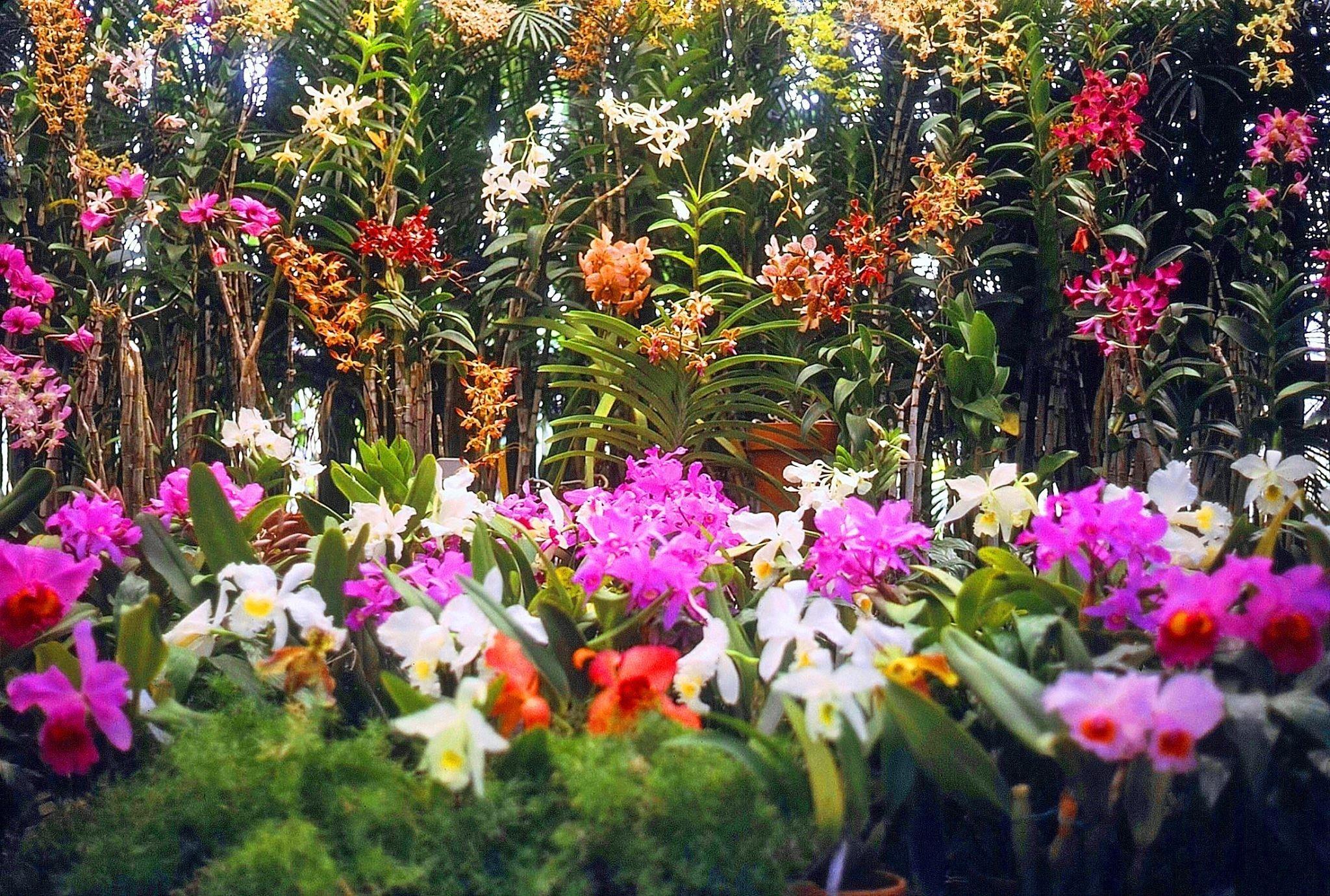 Orchid Section Foster Botanical Gardens Honolulu, Hawaiʻi
