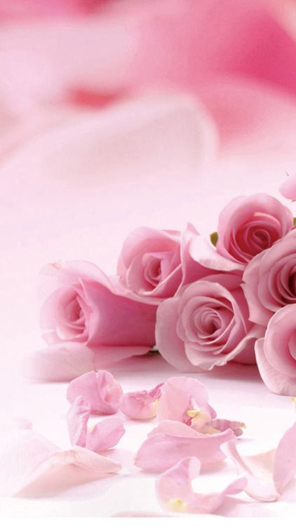 Pink Roses Flower Petals Iphone 6 Wallpaper Pink Flowers Wallpaper Pink Rose Flower Flower Wallpaper