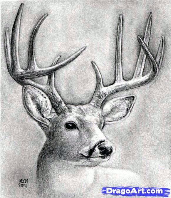Como Dibujar Algunos Animales Realistas Parte1 Taringa