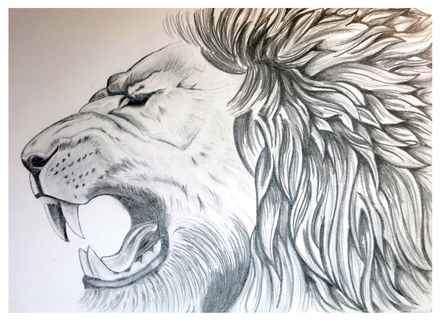 Lion art lion poster animal sketch graphite drawing