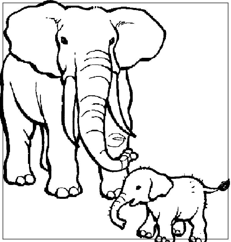 Imagenes De Elefantes Para Colorear Con Imagenes Elefantes