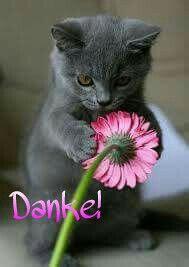 Katze + Blume