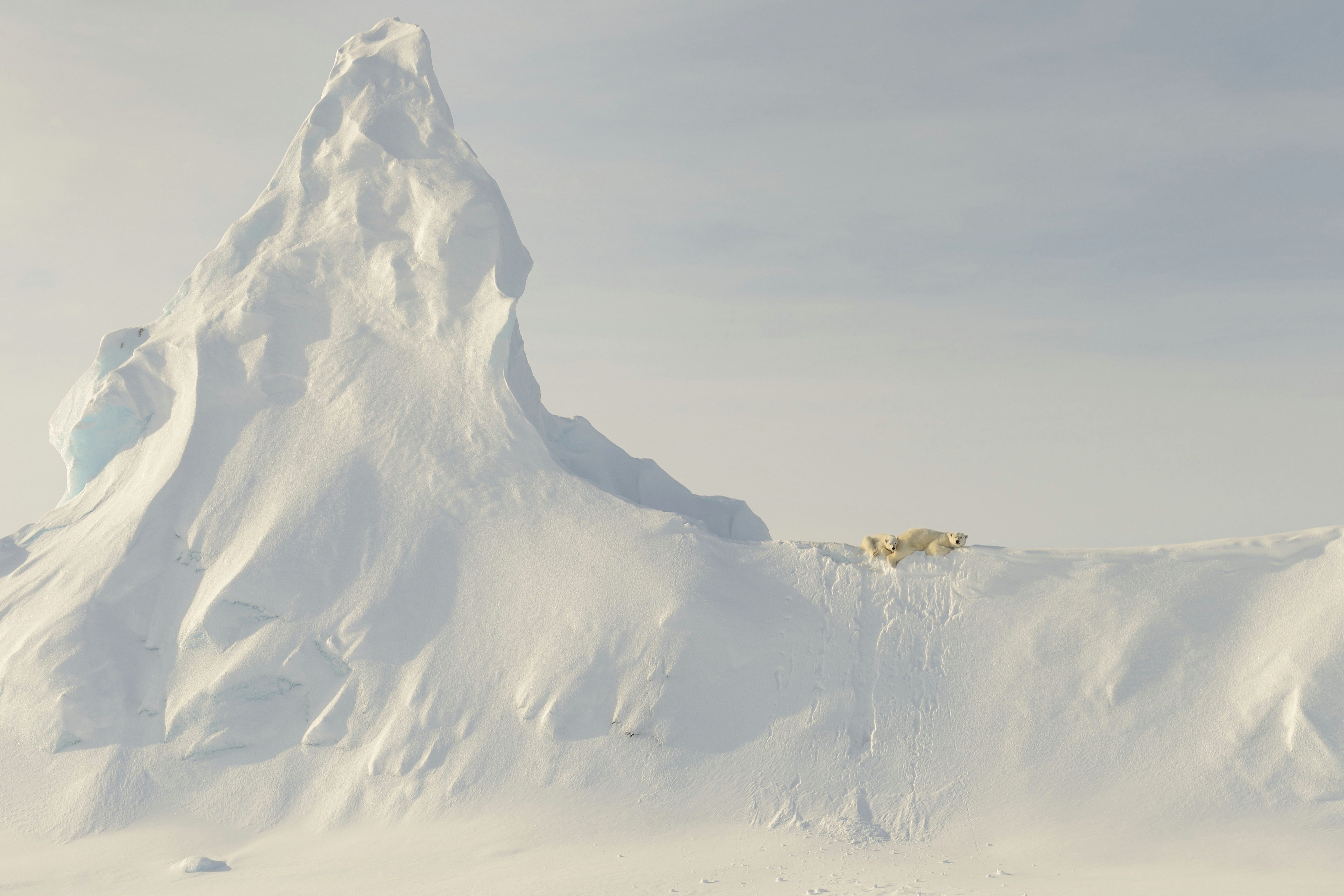 Bears on a Berg, Davis Strait, Baffin Island. Photograph: John Rollins/National Geographic Travel Photographer of the Year Contest