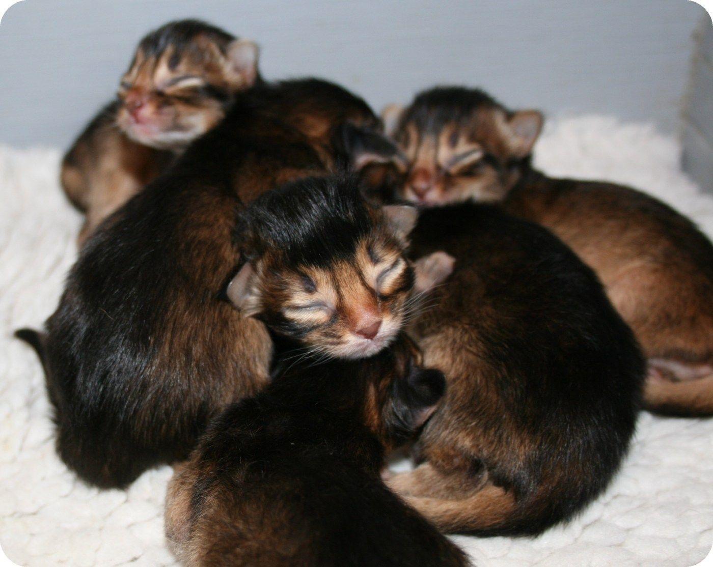 Precious Little Newborn Kitten Sleeping Sleeping Kitten Kittens Cutest Cute Cat Sleeping