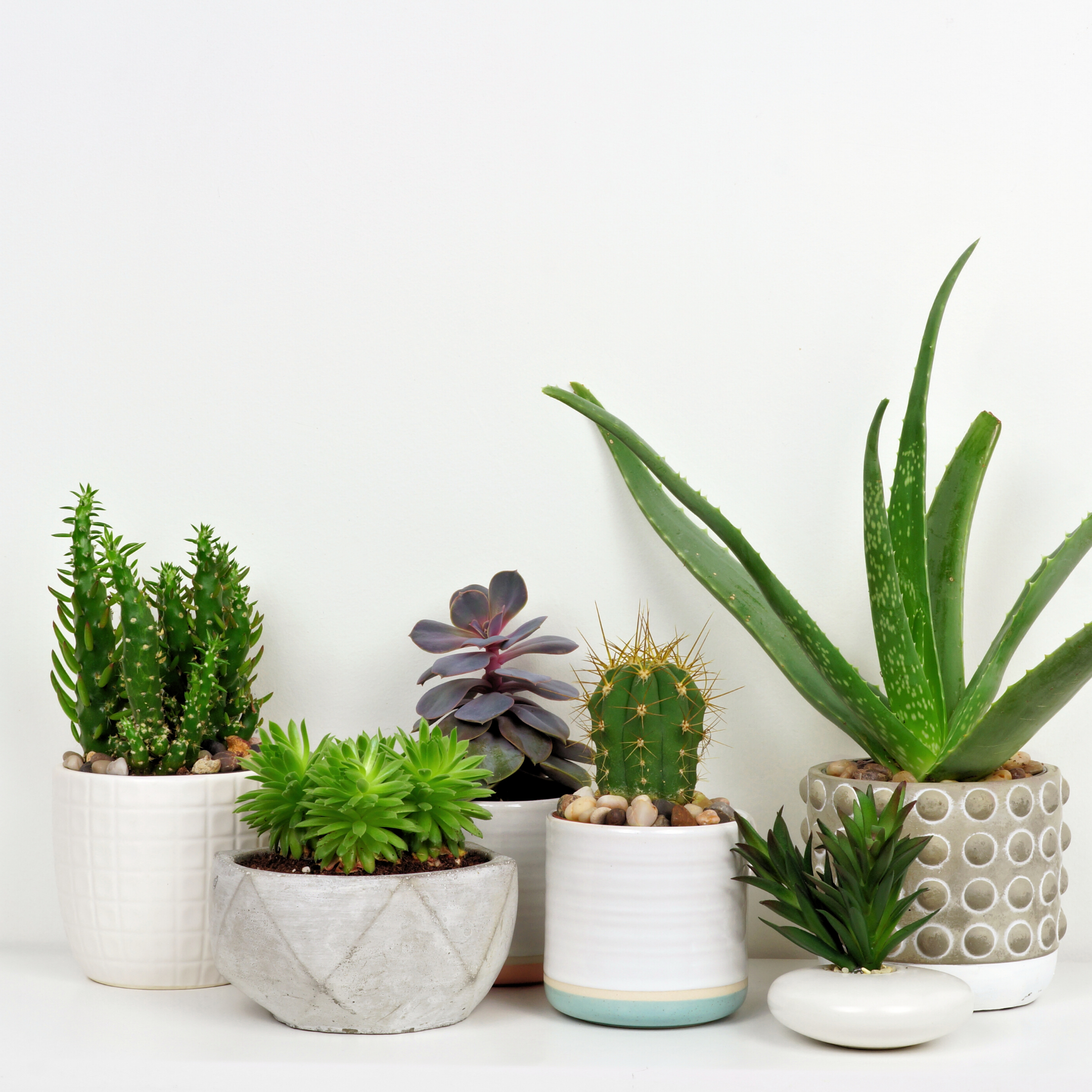 Tell us your favorite home plants? We love succulents. They are beautiful and easy to keep alive.  . . . . . #thehomemag #homeplants #cleanair #plantlife #homereno #home #homeinspo