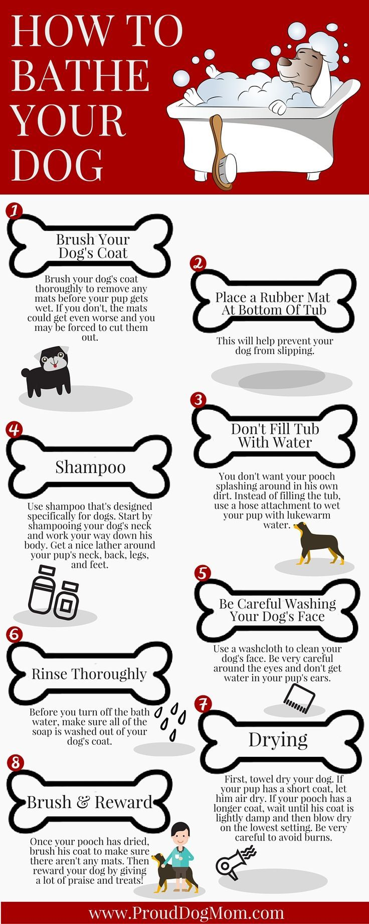 How to Bathe a Dog in a Shower foto