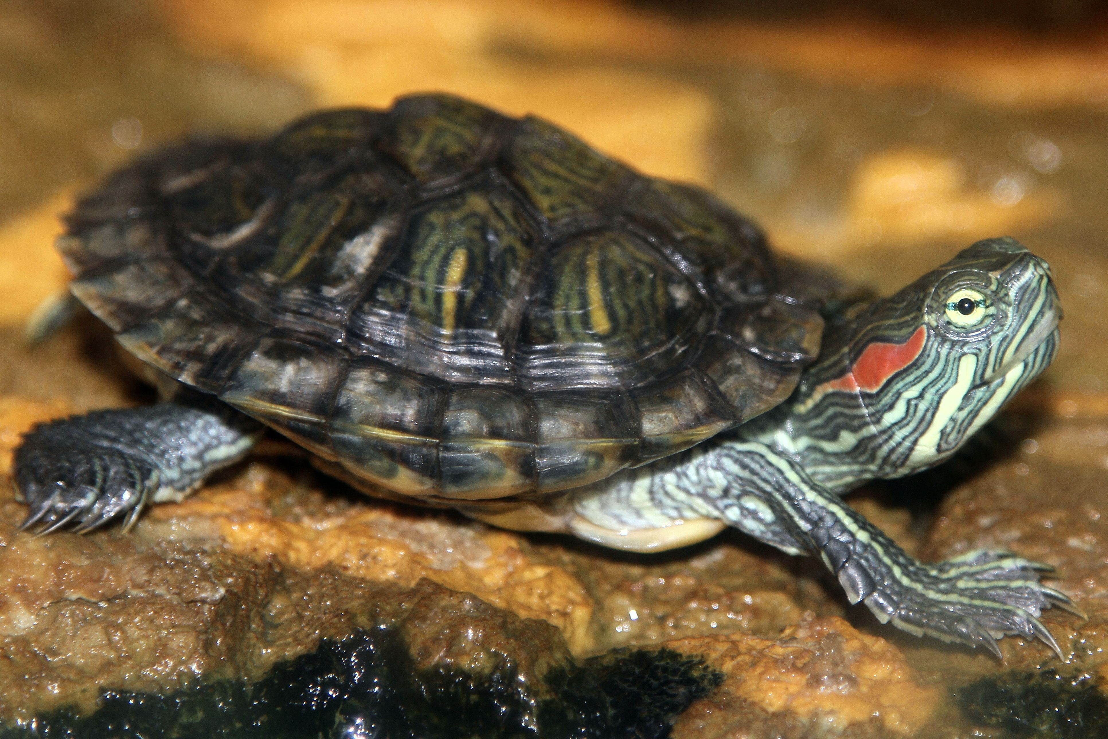 Chapter 3 was all about the turtle. The turtle was a symbol for ...