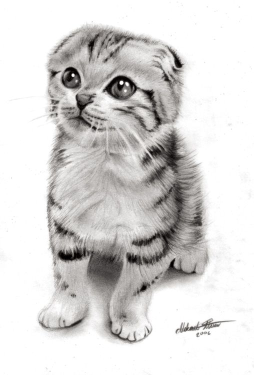 the ultimate cat care guide kitten care kittens kittens cutest