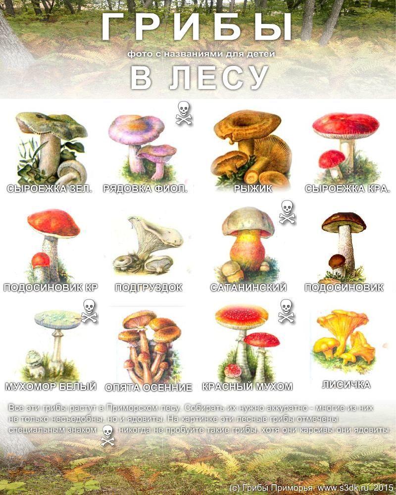 грибы их название и фото