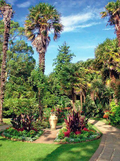 Trachycarpus Palms In Abbotsbury Gardens Uk Garden Ideas