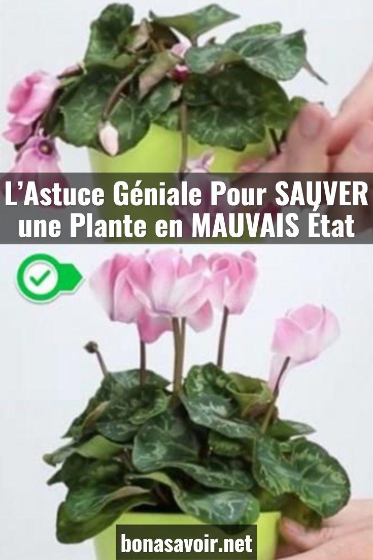 Epingle Par Sonia Bel Sur Plante Engrais Pour Plantes Jardinage