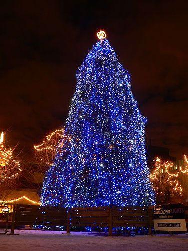 Phillips Christmas Lights.Nathan Phillips Tree 2 Christmas New Year S Christmas