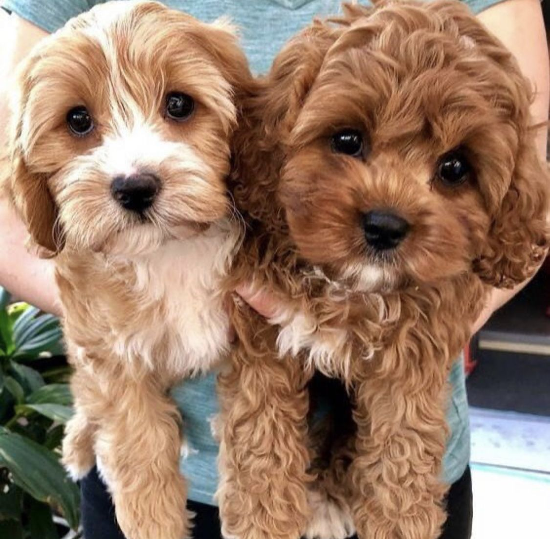 Pin by tanisha on dogs in 2020 cute animals animals