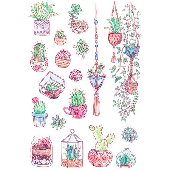 Cute succulent cactus garden sticker art my hand drawn watercolor succulents hanging