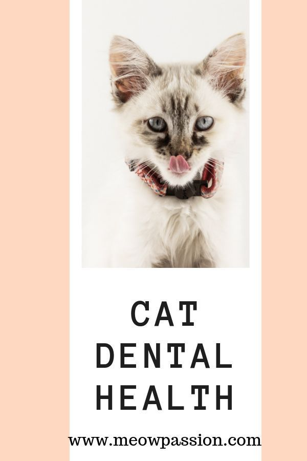 Cat dental health - tips and recommendations for cat owner who wish to properly brush and provide the right dental care for their feline friends. Find out more about ways how to ensure the proper dental care to avoid dental diseases. #cathealth #cats #meowpassion #Dentalcares #dentalcare