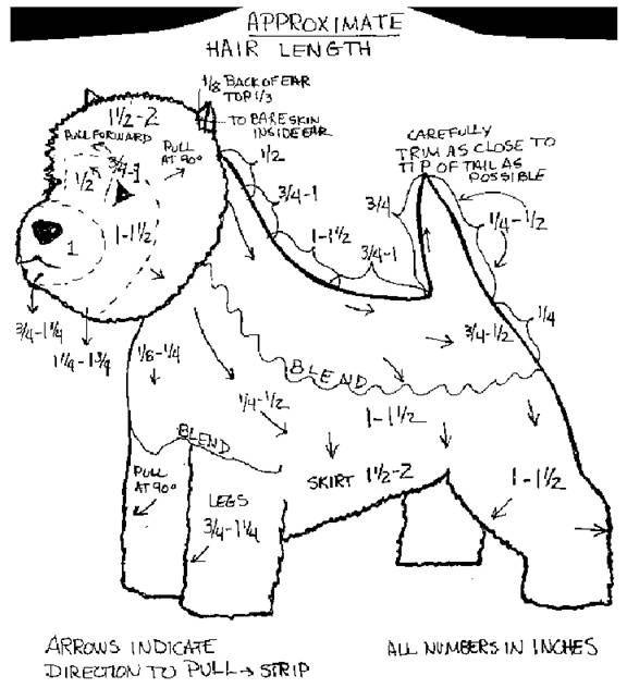 How To Groom Your Westie Dog Grooming Styles Westies Dog Grooming