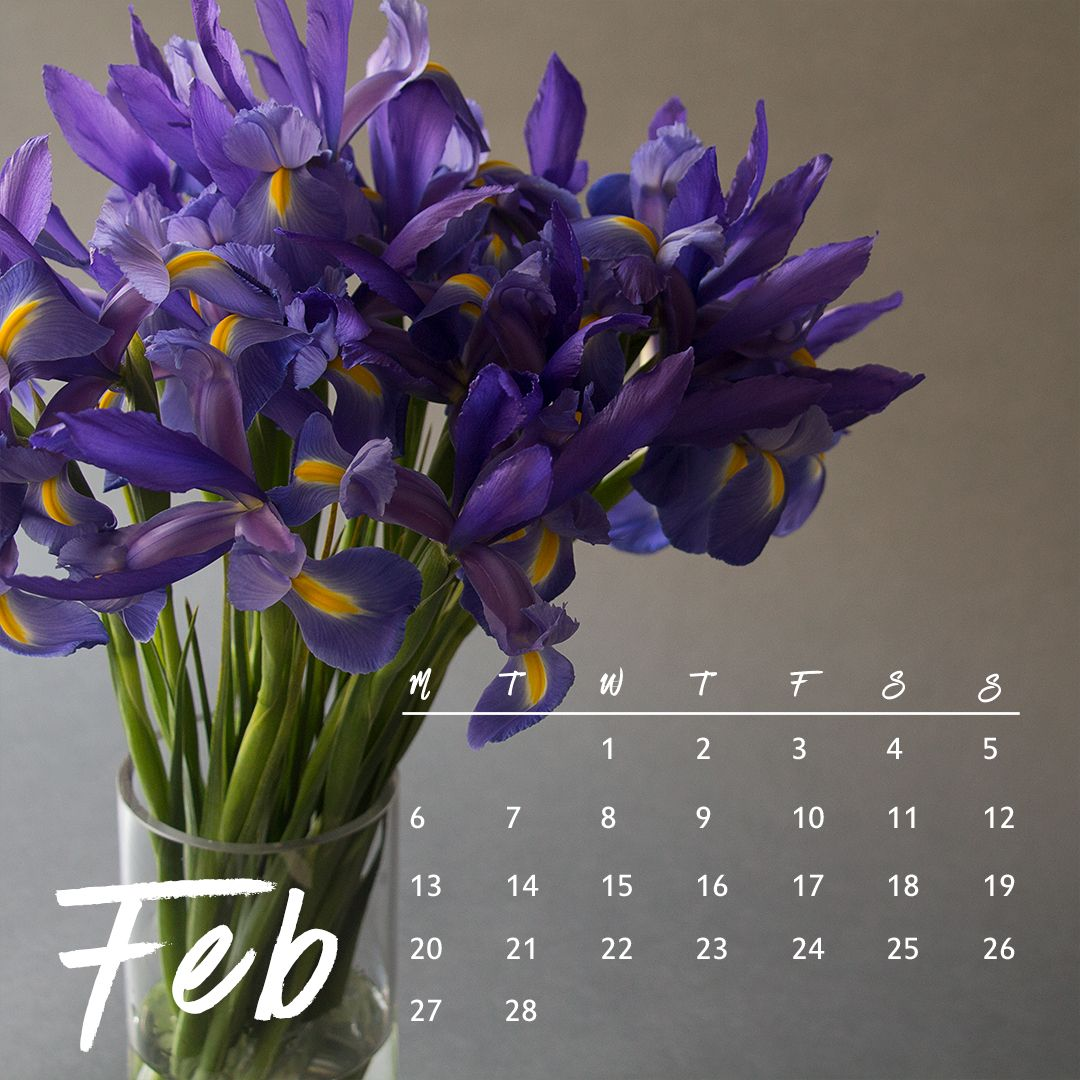 The Iris Is The Birth Flower Of February Know Someone Celebrating