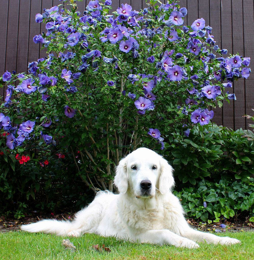 Ditte is so used to modeling, that when I am about to take photos of flowers  she comes and places herself in front of them and thinks it is her I want to photograph! :))