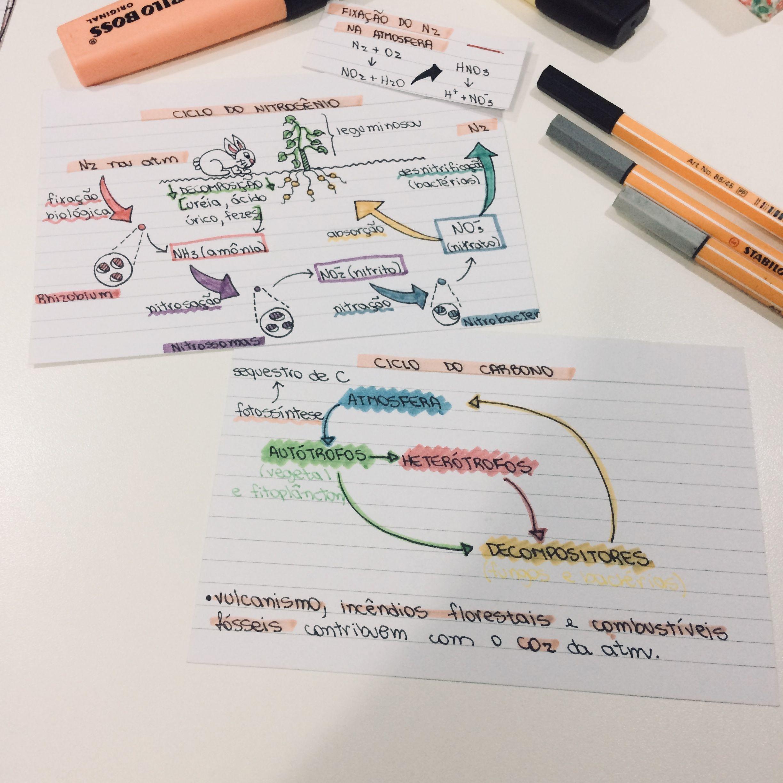 Ciclos biogeoquímicos: ciclo do nitrogênio e do carbono | Resumos ...