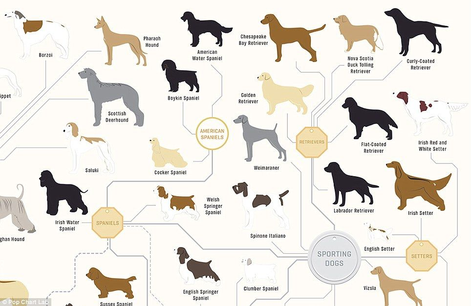 The Family Tree Of Dogs Chart Reveals How Every Breed S Related
