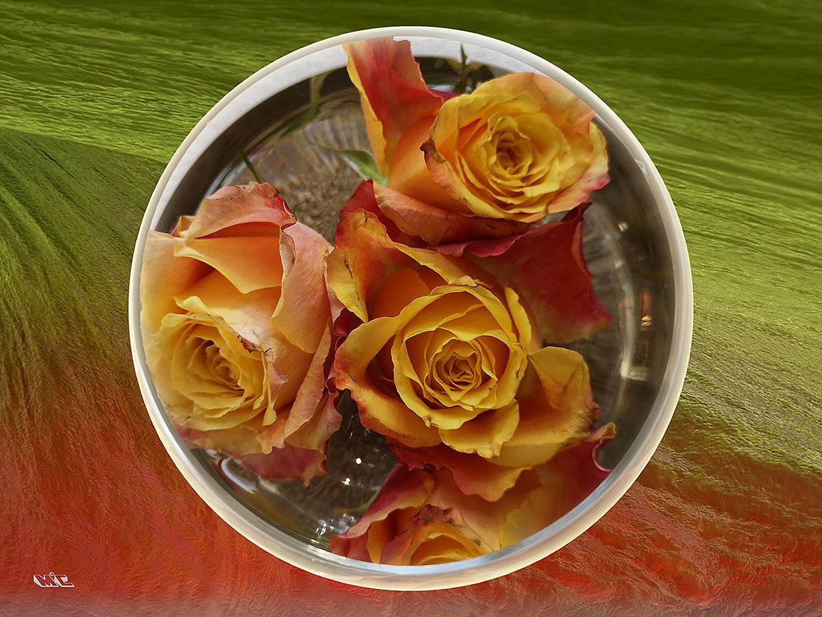 Rose circle / Photoart
