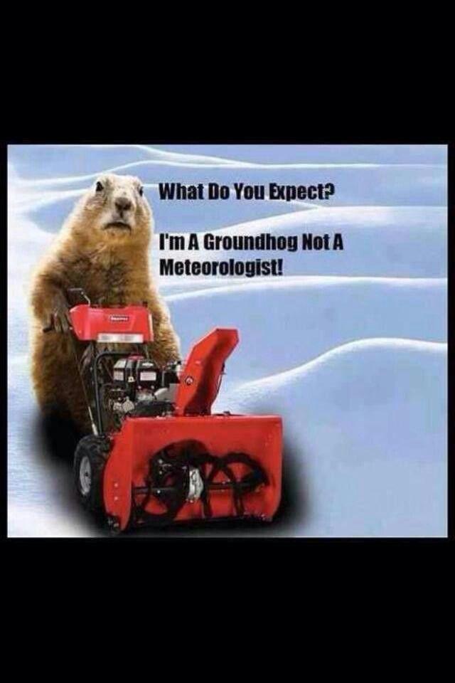 Buffalo! Grumpy cat christmas, Groundhog day, Laughter