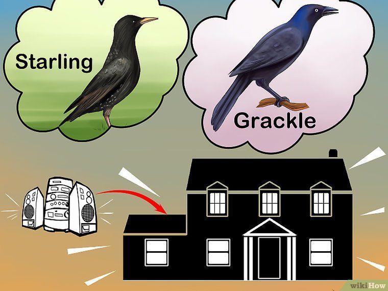 3 Ways To Get Rid Of Birds In 2020 Keep Birds Away Birds Backyard Birds