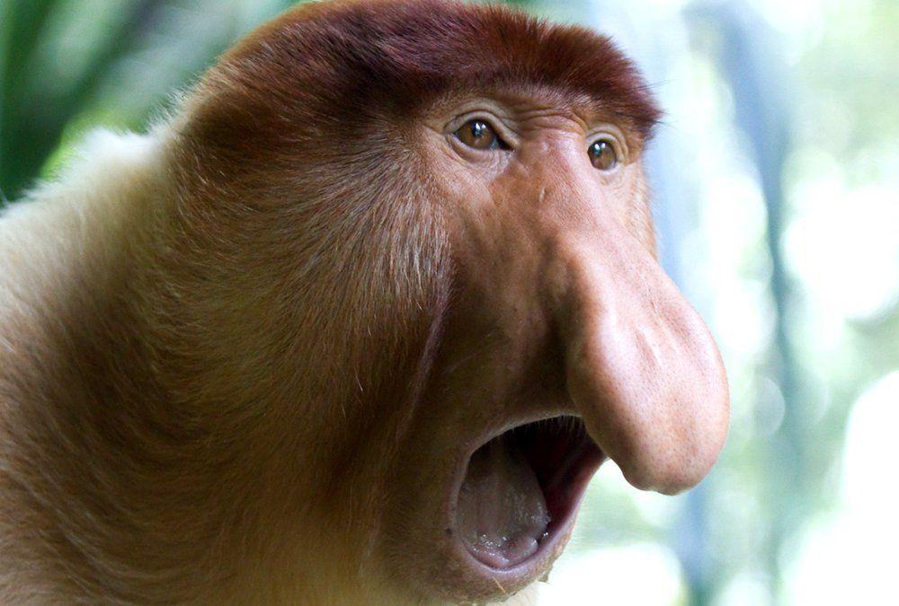 Animales Feos Fondos 2 Animales Feos Monos Animales Y