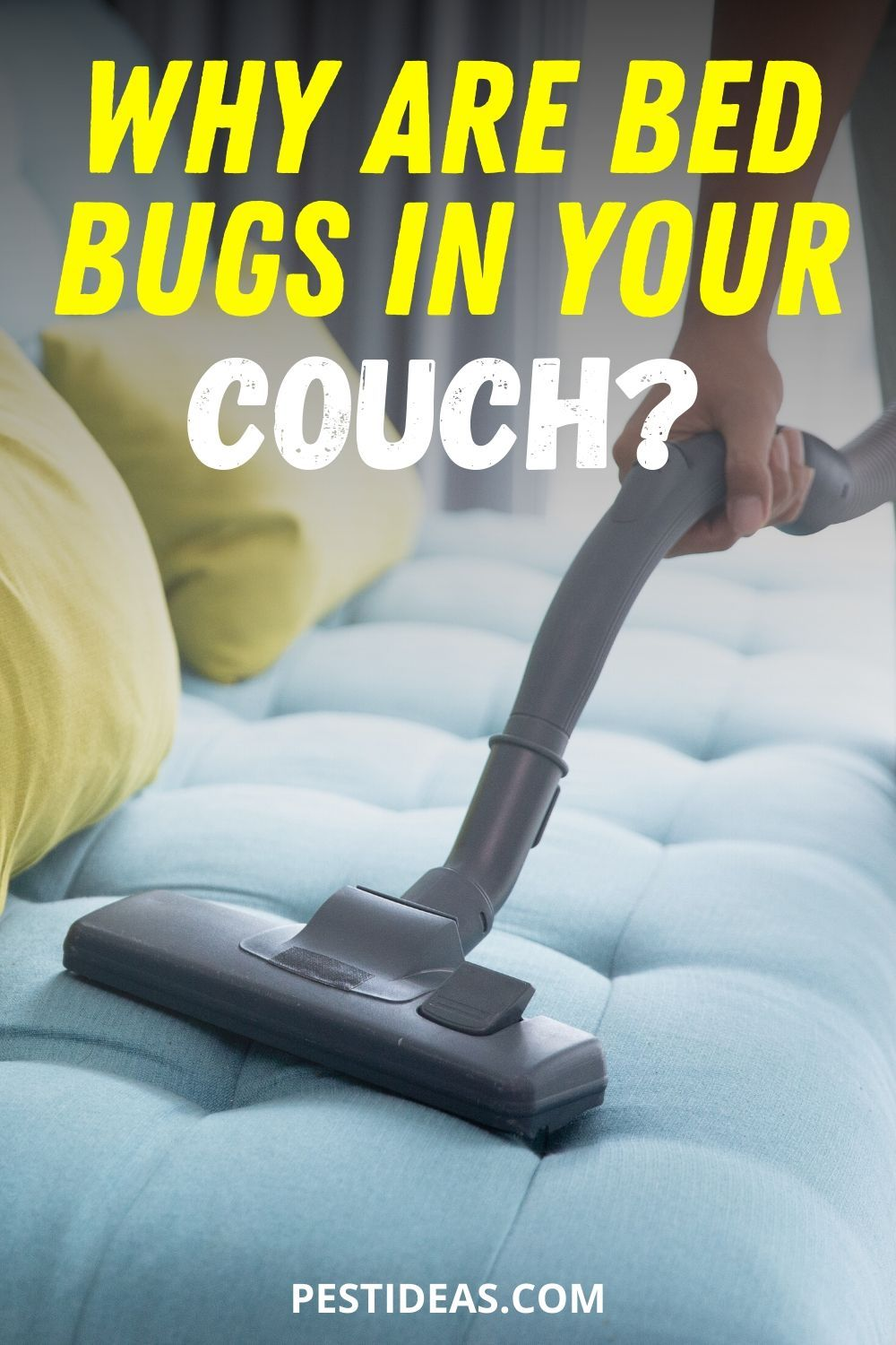 Why are Bed Bugs in Your Couch in 2020 Rid of bed bugs