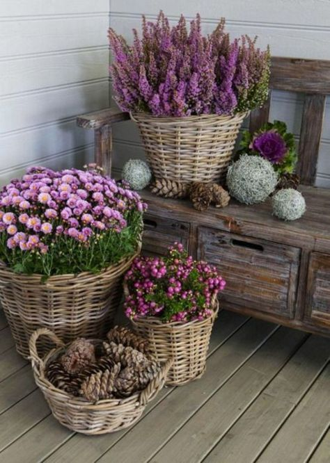 Hut garden ideas