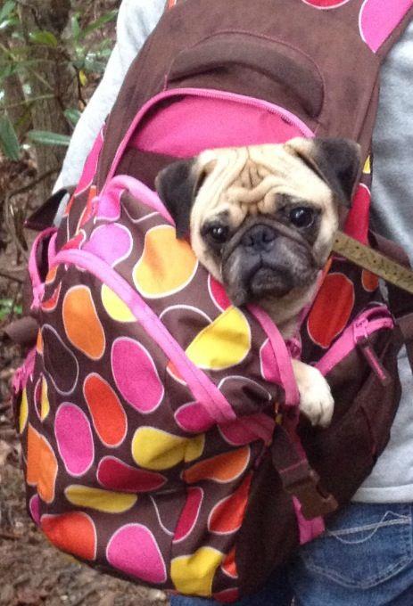 Pug pack :)