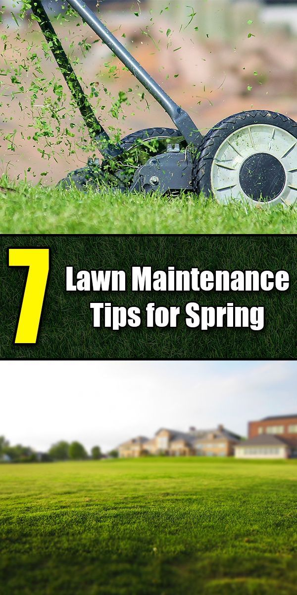 7 Lawn Maintenance Tips for Spring