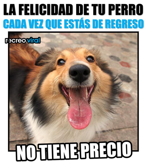 20 Imagenes De Perritos Que Irradian Amor Y Felicidad Cada Vez Que Ven A Sus Duenos Regresar A Casa Imagenes De Perros Perros Perros Frases