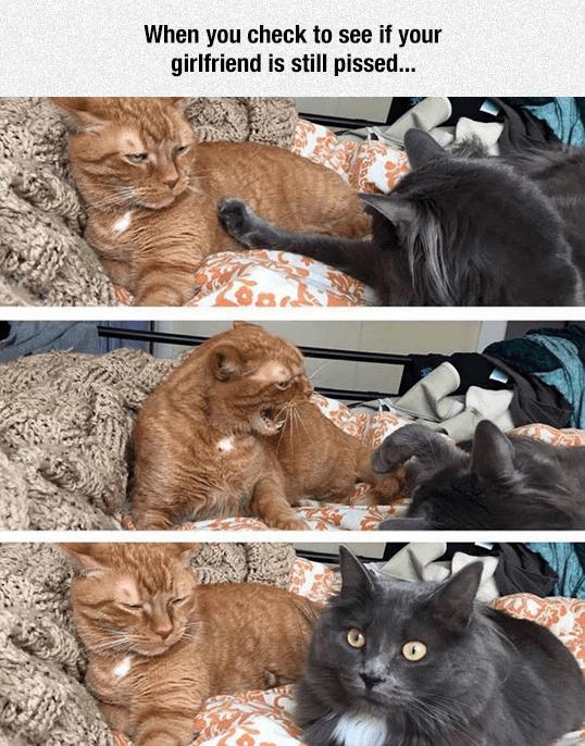 You Still Mad Meme : still, Honey,, Still, Funny, Animal, Jokes,, Memes,, Animals