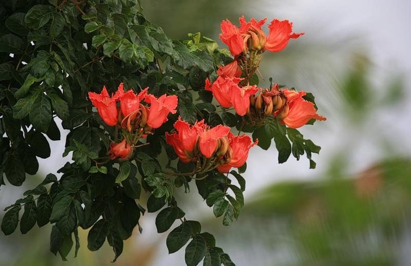 котенок тюльпанное дерево фото в домашних условиях места расположены под