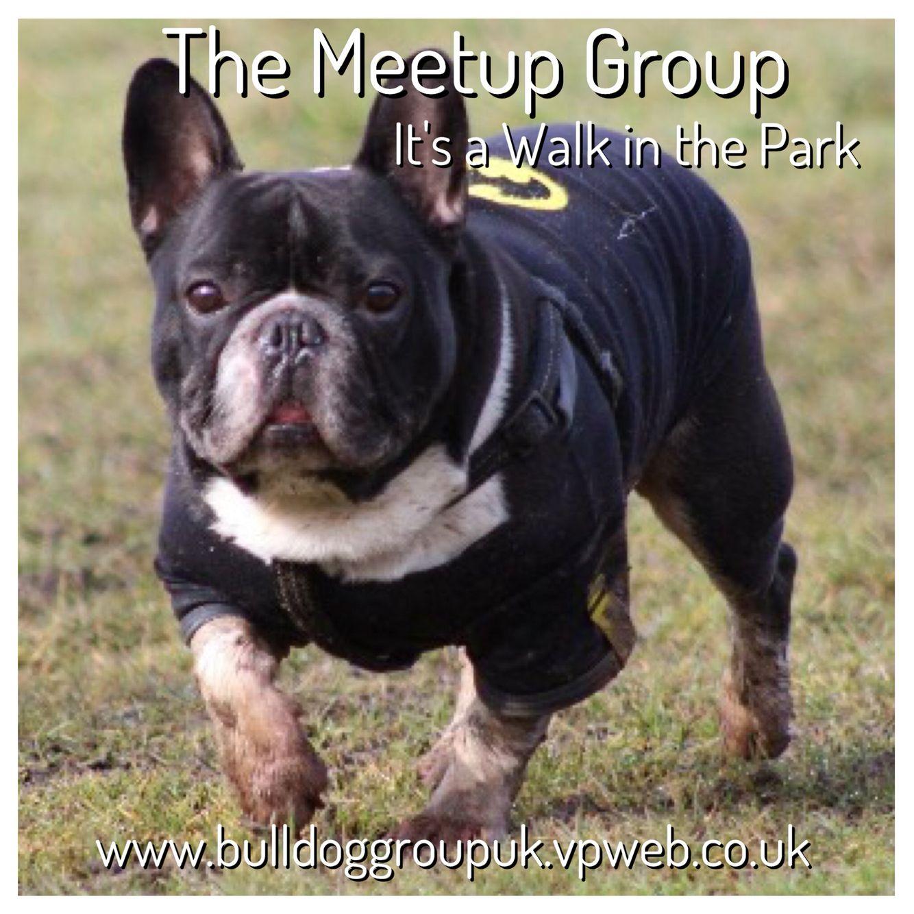 Meetup Batpig, French bulldog, Bulldog
