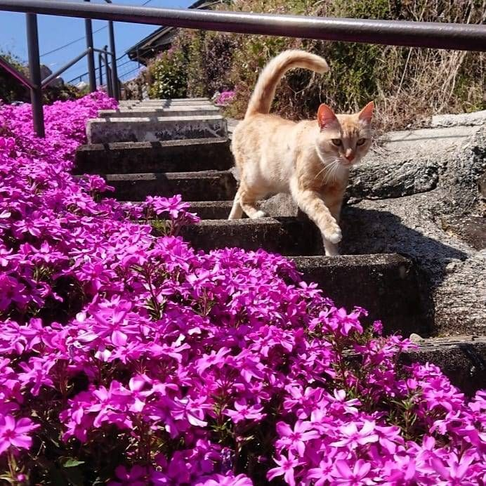 michi2414 on Instagram - #aesthetic #cat #cats #core #cottage #cottagecore #curators #cutie #earth #flowers #garden #nature #on #photography #plants #tumblr