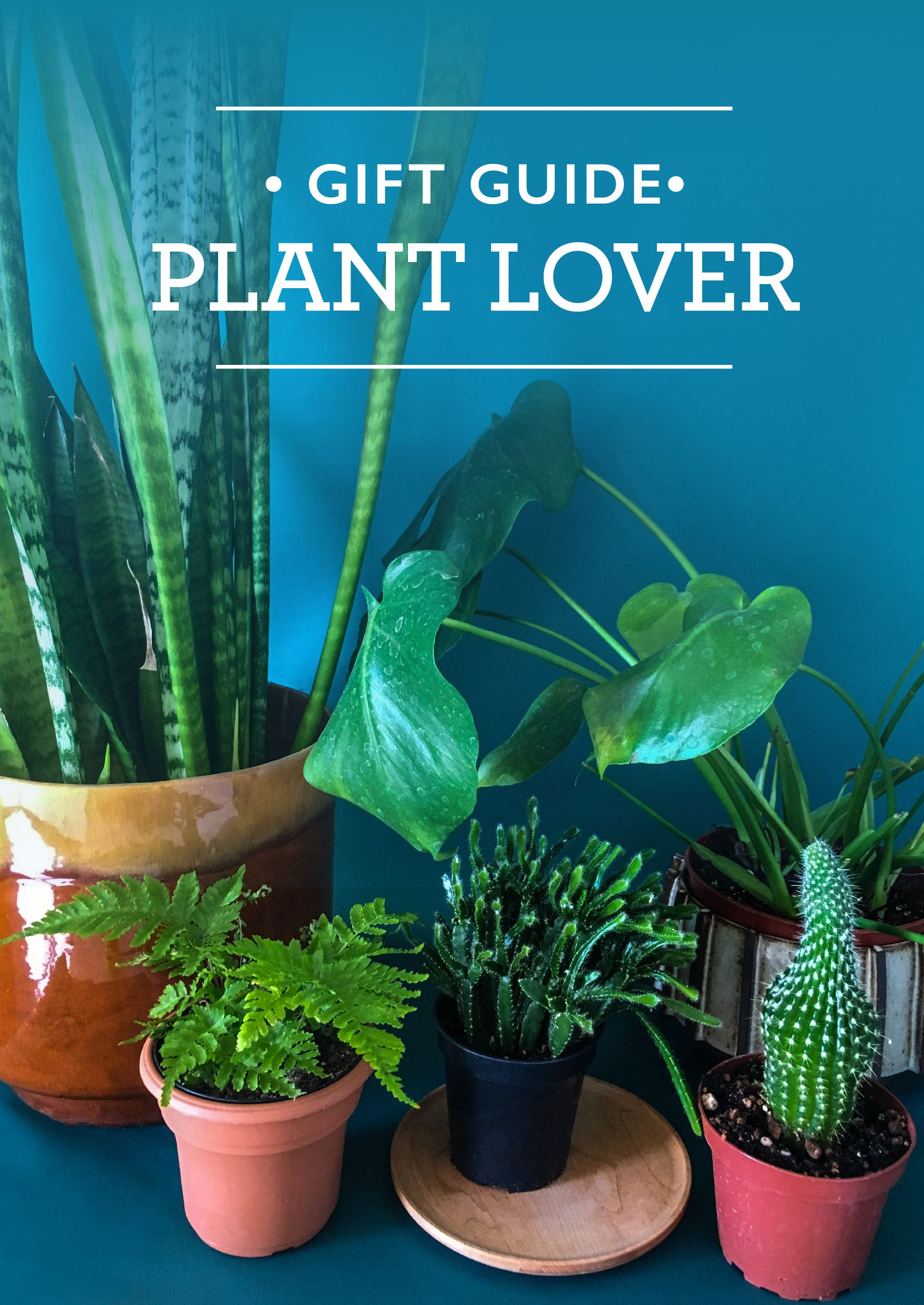 Gift ideas for the plant enthusiast