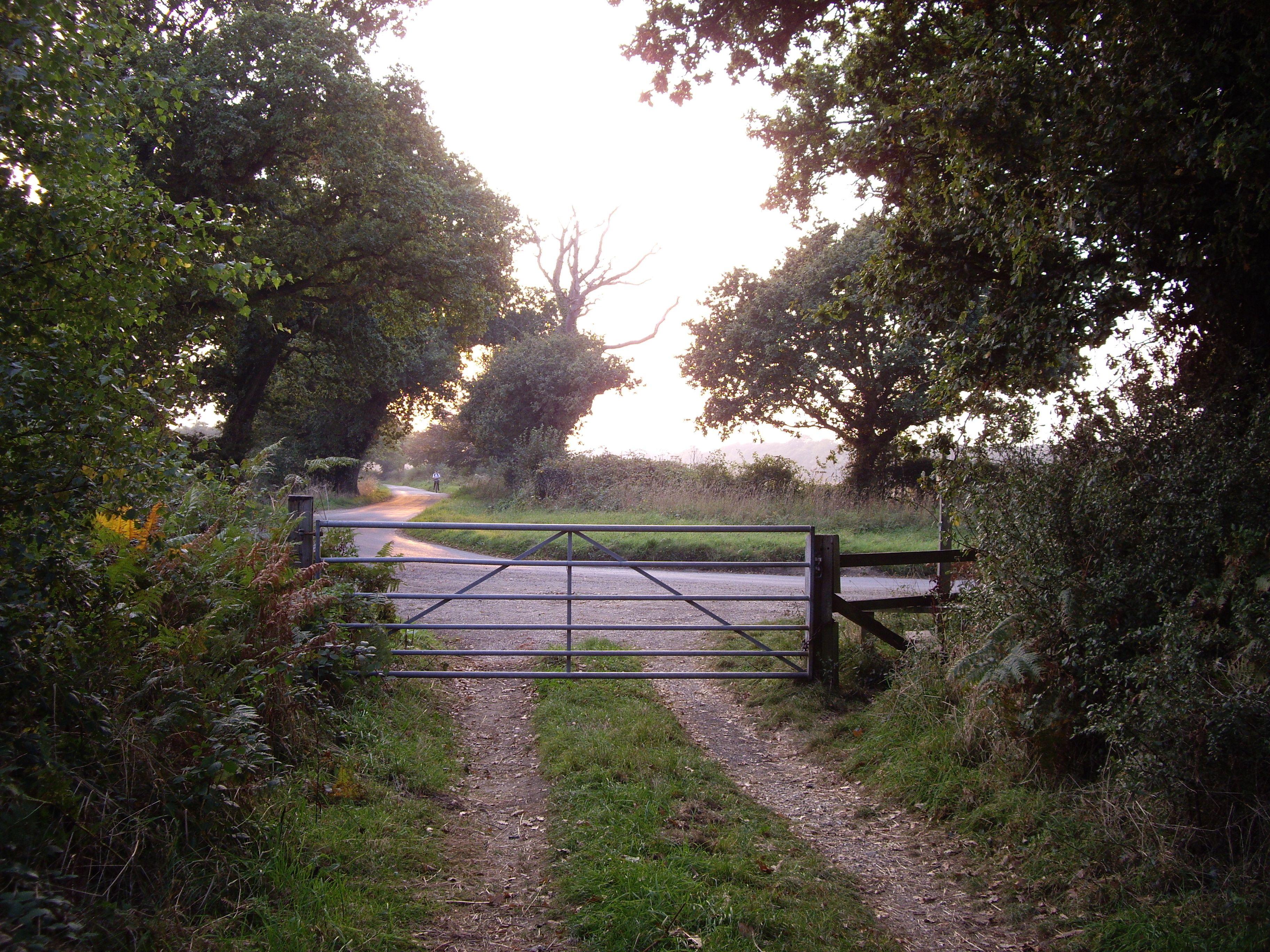 Summer Lane, Exbury, UK Cottage garden, Garden art, Outdoor