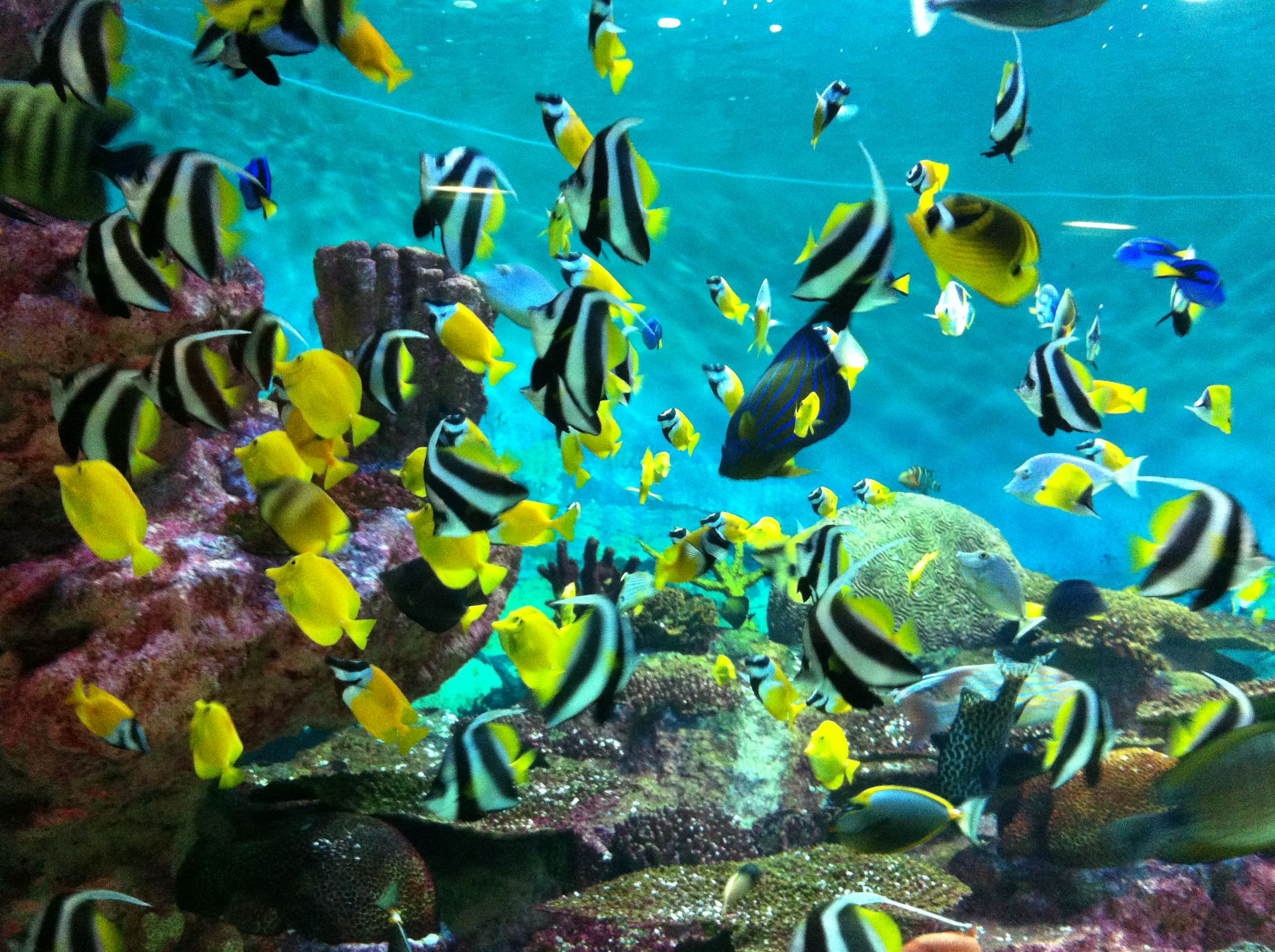 hd aquarium wallpaper o oshenka Pinterest