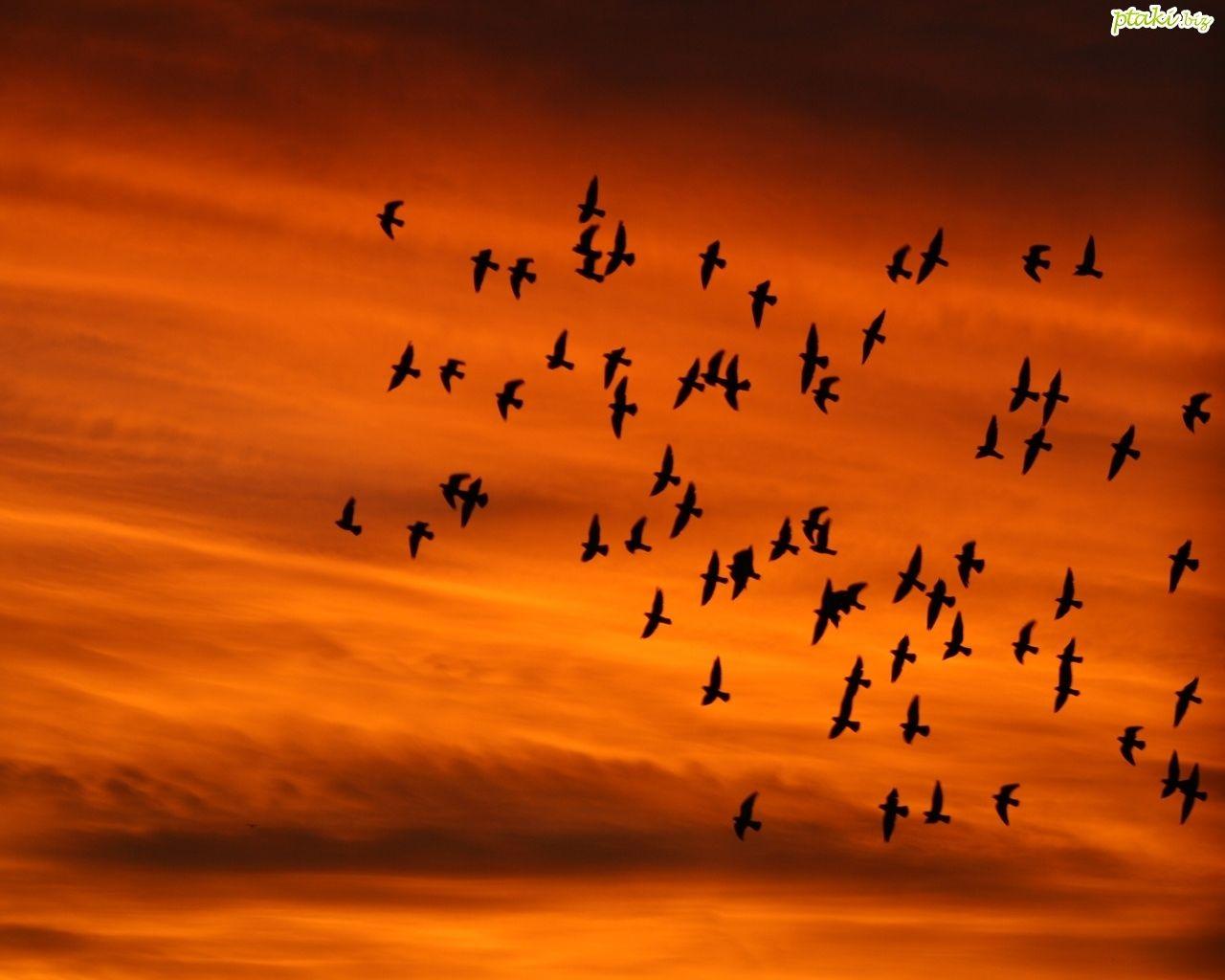 3 3 3 Funny Birds Birds Bird Wallpaper