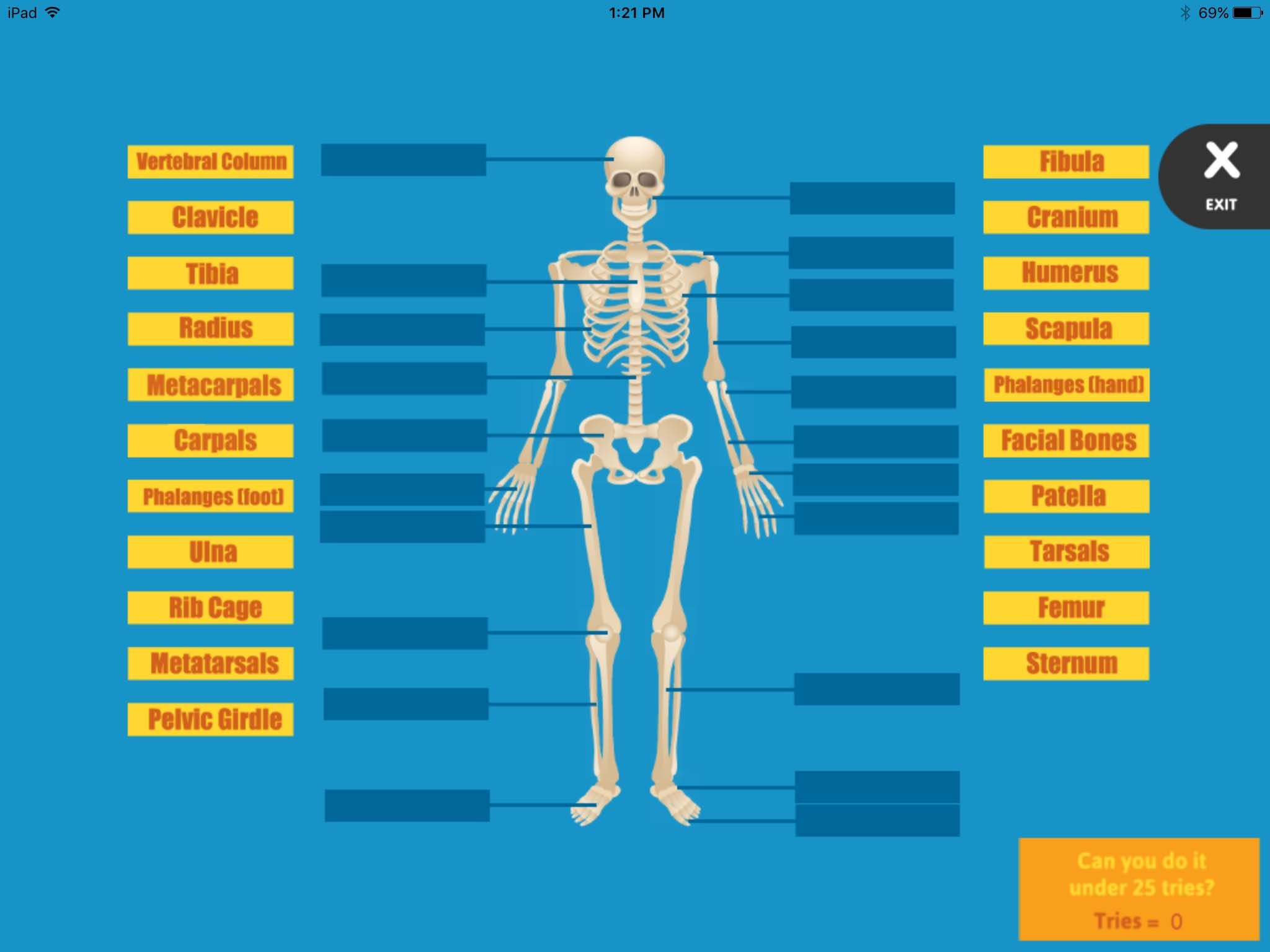 Learn the Skeletal System - Label the Bones | ABCya! | Lessons ...