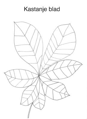 kastanjeblad kleurplaat