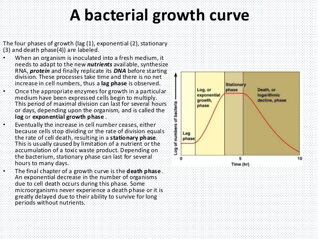 list the phases of the bacterial growth curve - Google Search - ideen f amp uuml r badezimmergestaltung
