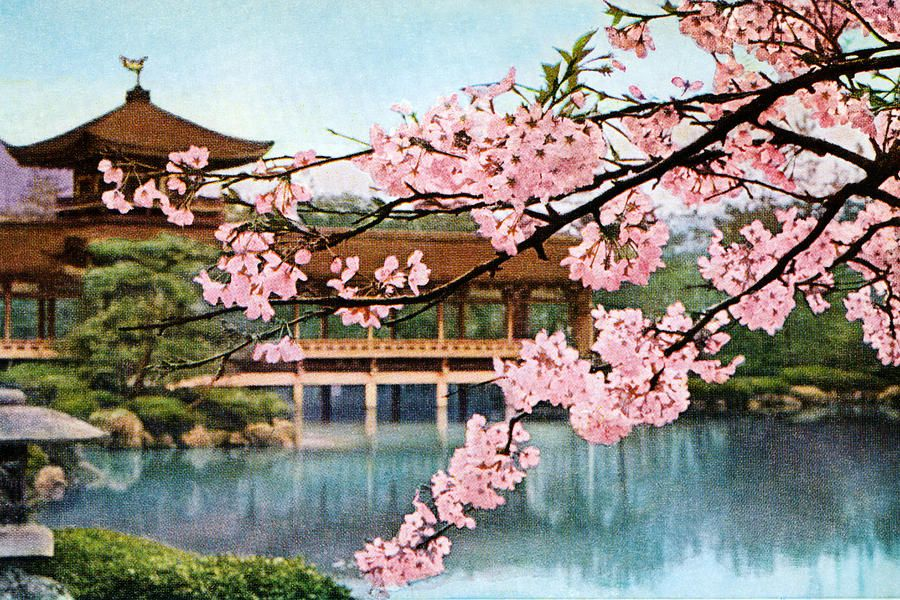 Gentil The Classic Blossom Tree Makes This Painting Come Alive From Japan!