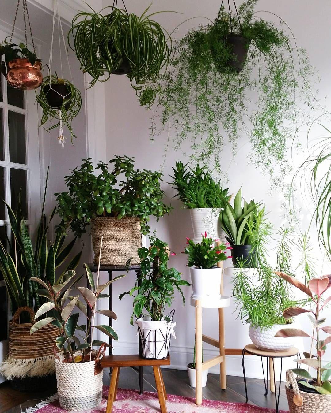 Grünpflanzen Green Plants Zimmerpflanzen