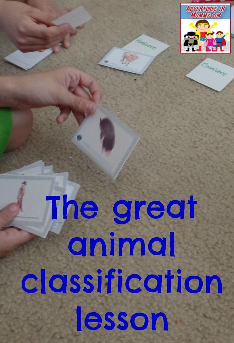 Teach your kids how animals are classified Animal