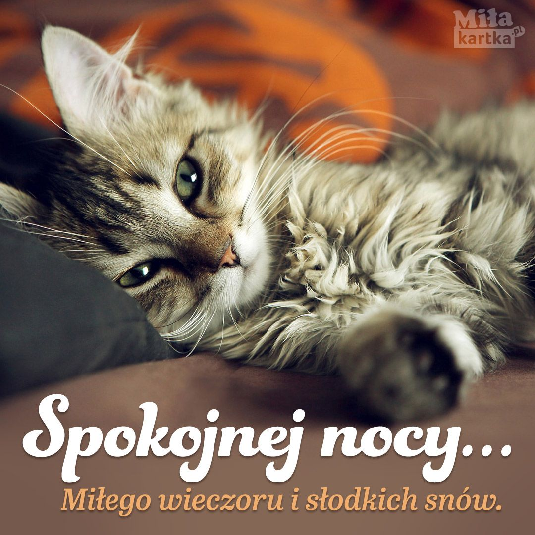 Spokojnej Nocy Na Dobranoc Dobranoc Kotki Urocze Koty