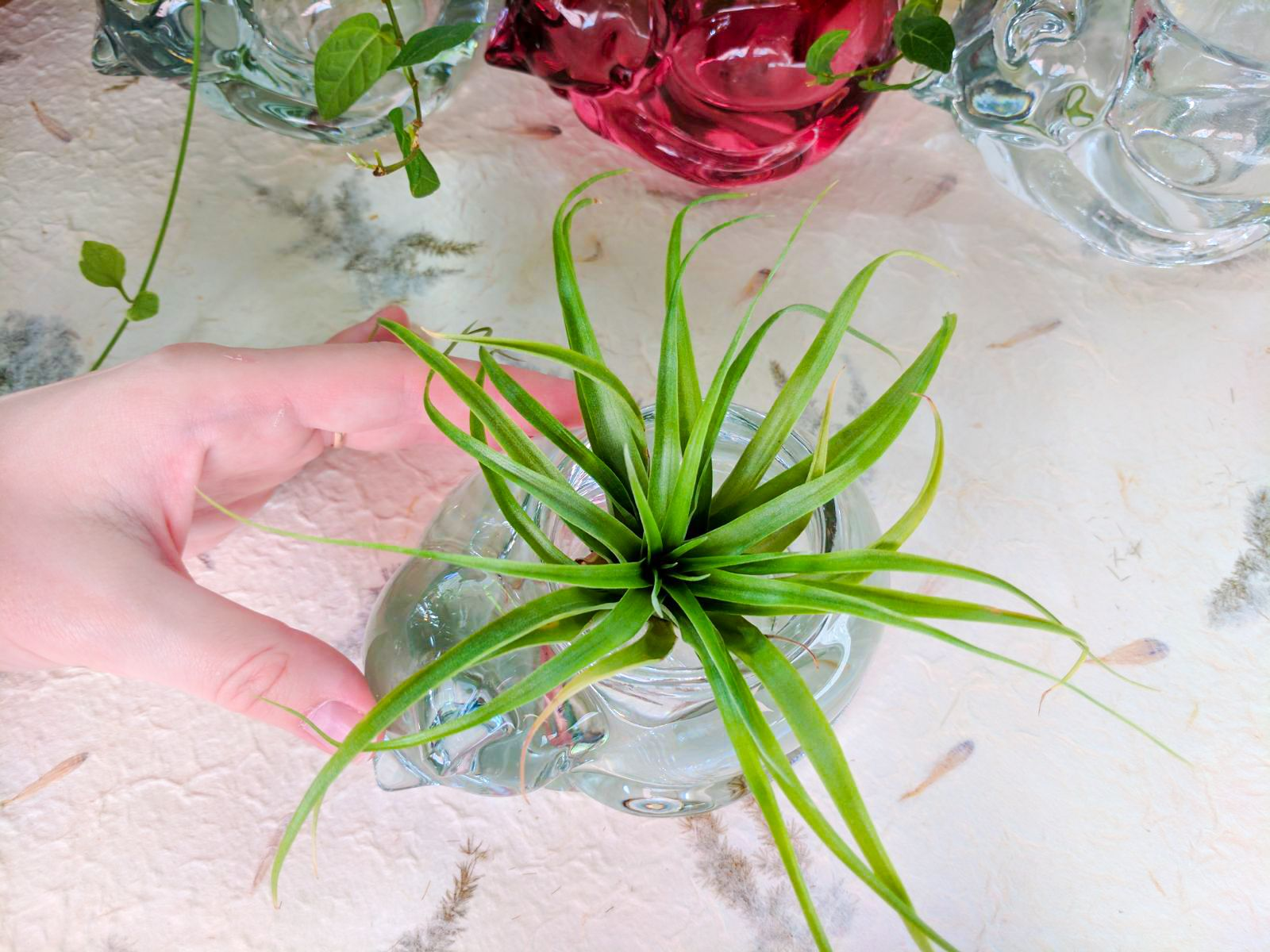 Tillandsia Air Plant And Glass Cat Planter #Tillandsia #Cat #Cats