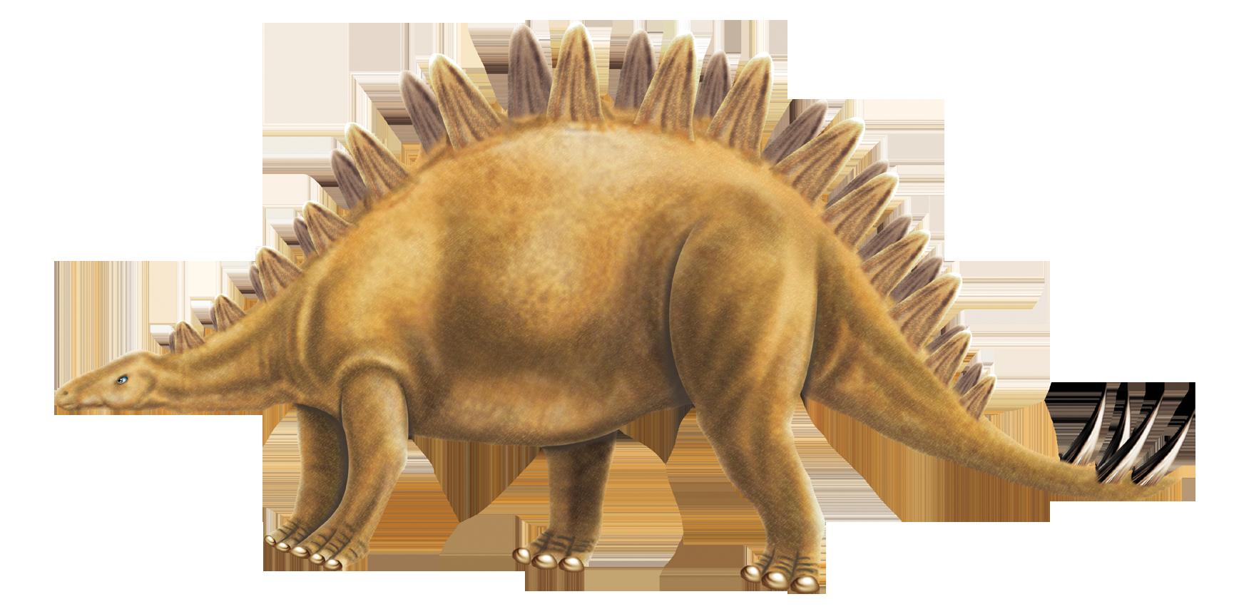 Stegosaurus Dinosaur Picture
